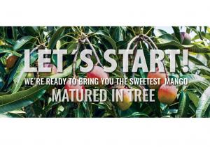 desarrollo web branding marketing sector agroalimentario diseño